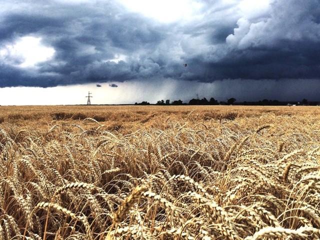 Agricoltura in Maremma, Cia: cerealicoltura allo stremo