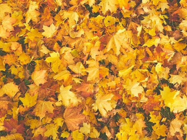 L'influenza dell'equinozio d'autunno sui segni zodiacali: tranquillità per Gemelli