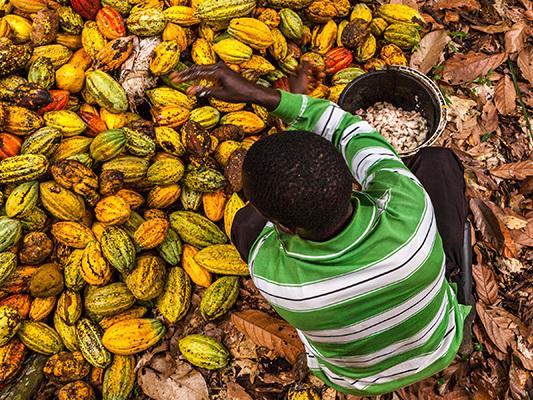 La lotta al cacao illegale