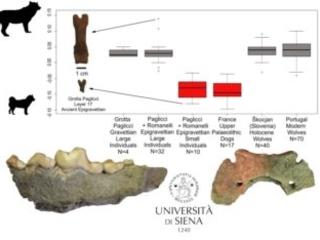 Il più antico cane italiano scoperto in due siti paleolitici in Puglia