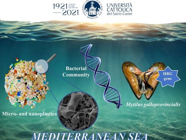 Dalle microplastiche alle cozze: il viaggio dei batteri (anche patogeni) lungo la catena alimentare