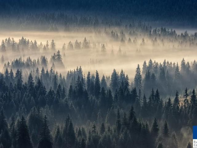 In Europa ci sono ancora foreste incontaminate