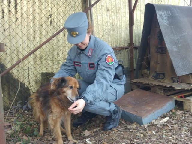Animali maltrattati, sequestri nel veronese