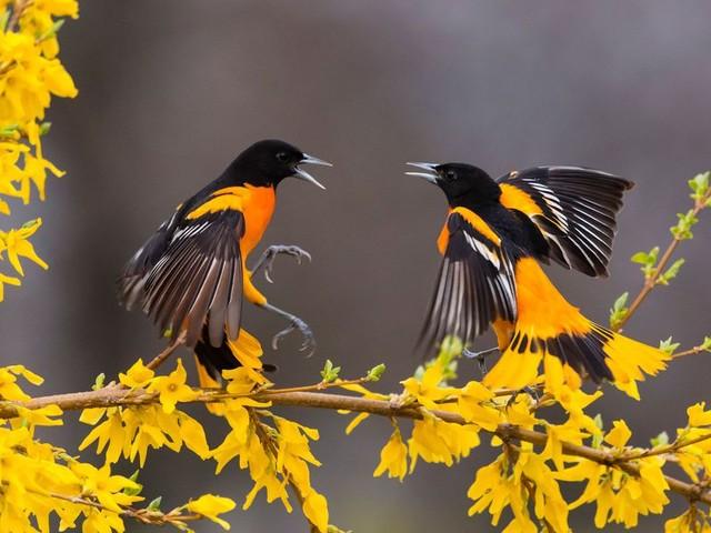 Negli Ultimi 50 anni negli Usa e in Canada sono scomparsi quasi 3 miliardi di uccelli