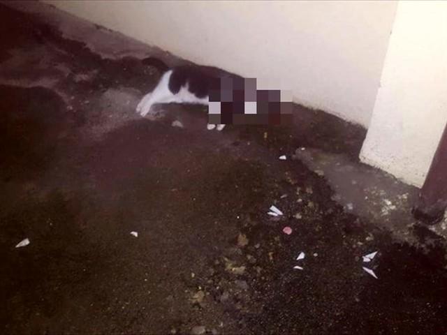 Attirano un gatto con del cibo, poi lo uccidono facendo esplodere un petardo