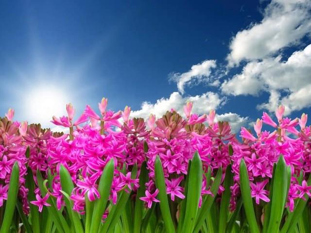 Meteo Campania: assaggio di primavera nel fine settimana, poi torna l'inverno