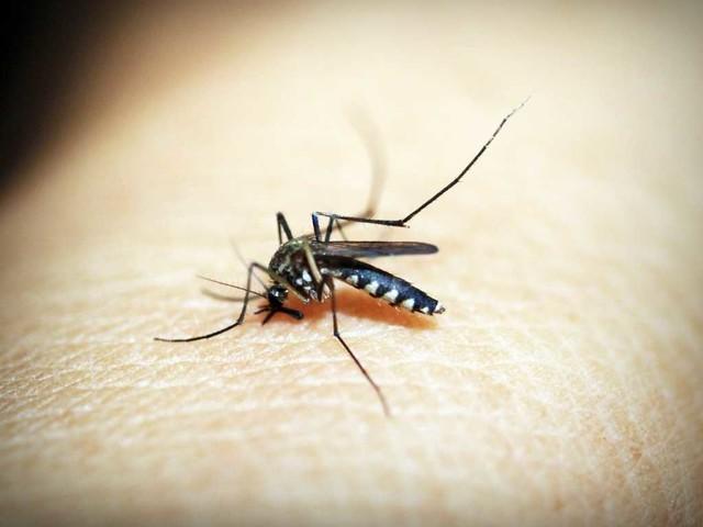 Un mondo senza malaria entro il 2050
