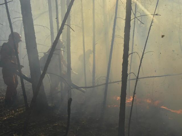 Foreste secolari inghiottite dai roghi: Putin invia l'esercito