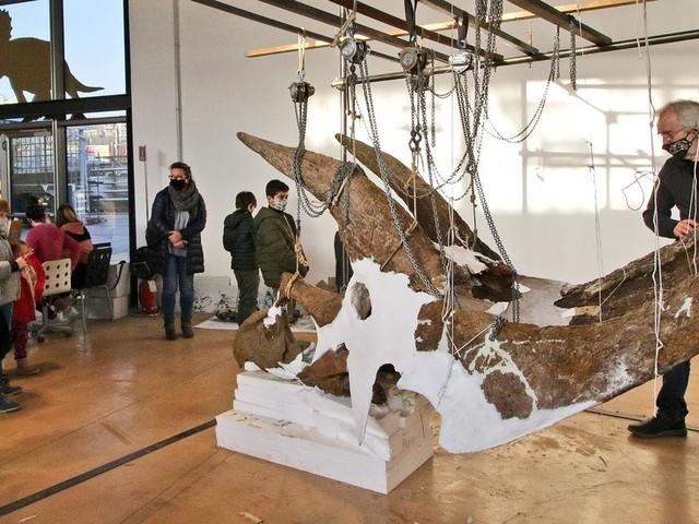 Il dinosauro gigante Big John rinasce e si svela al pubblico