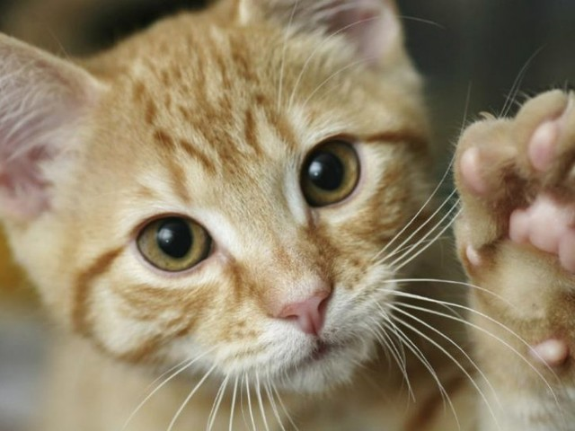 17 Febbraio: Giornata Internazionale dei nostri amici gatti