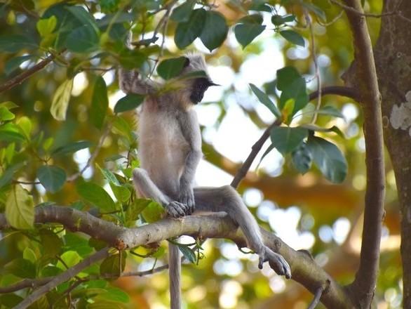 Gli Homo sapiens hanno colonizzato la foresta pluviale dell'Asia meridionale cacciando scimmie e scoiattoli