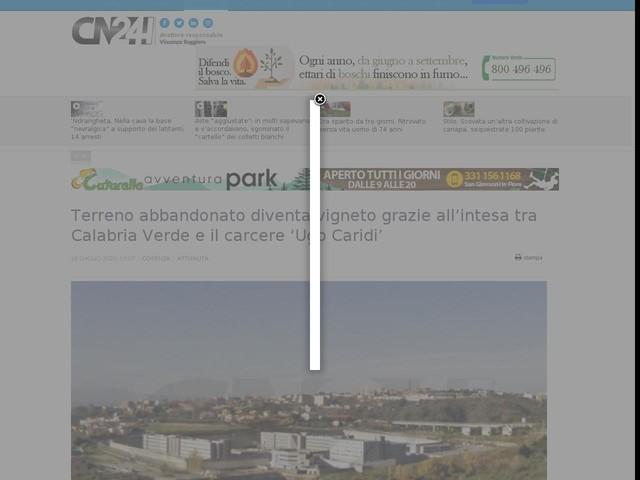 Terreno abbandonato diventa vigneto grazie all'intesa tra Calabria Verde e il carcere 'Ugo Caridi'