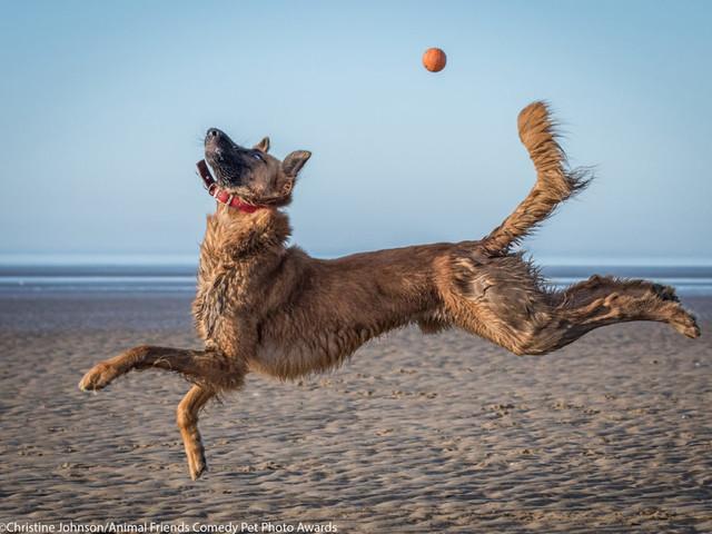 Le foto di cani, gatti & co più divertenti: ecco i finalisti dei Comedy Pet Photo Awards 2021