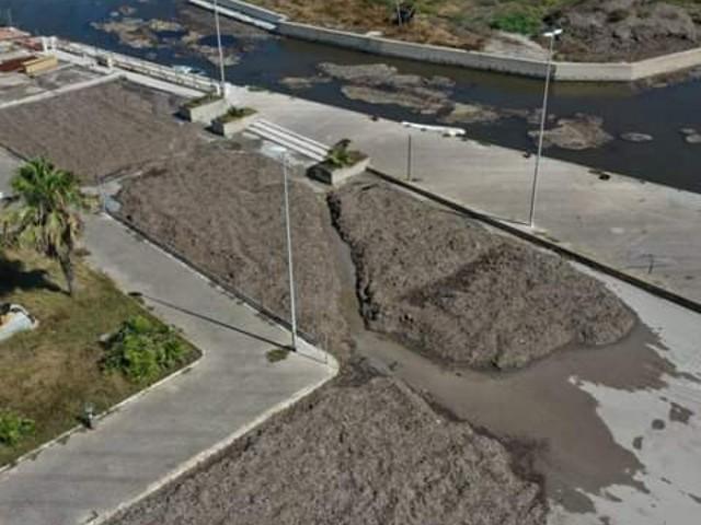 """Cumuli di alghe nella darsena di San Cataldo, la denuncia di Scorrano: """"Insetti, pantegane e miasmi"""""""