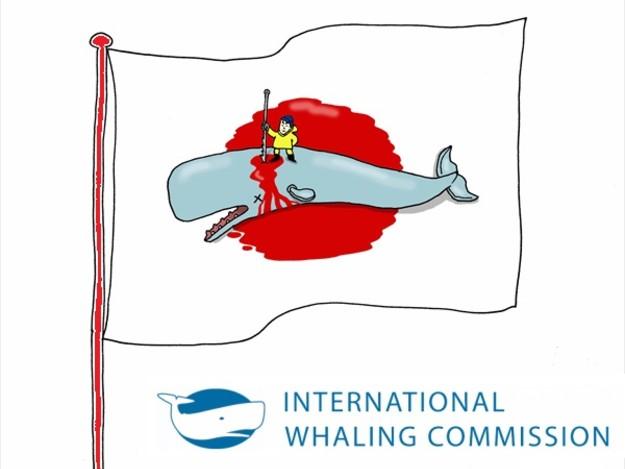 Sea Shepherd: bene che il Giappone esca dall'Iwc. Fine della caccia alle balene nell'Oceano Antartico