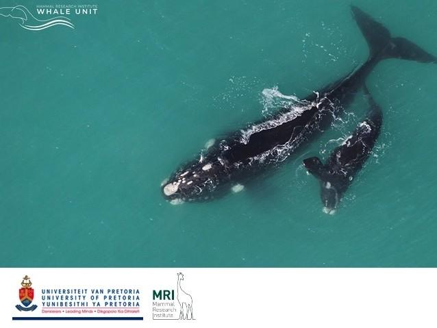 Balene, delfini e focene a rischio estinzione, gli scienziati: fare urgentemente qualcosa per salvarli