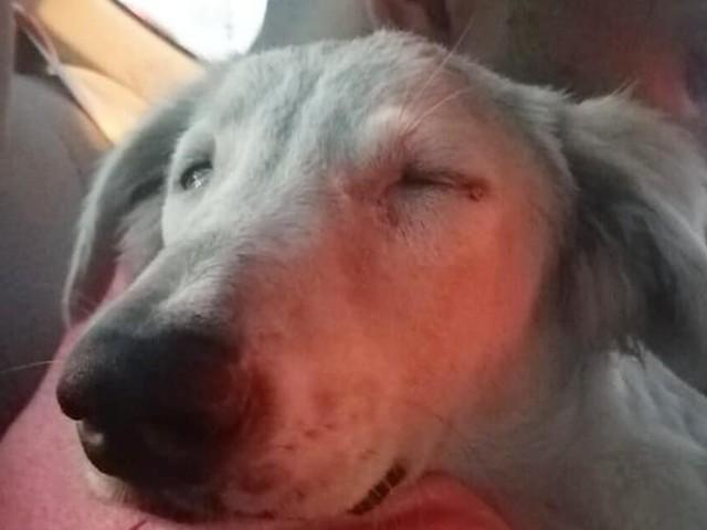 Il cane Snowy si addormenta sulle spalle dell'uomo che lo ha portato via dalla strada