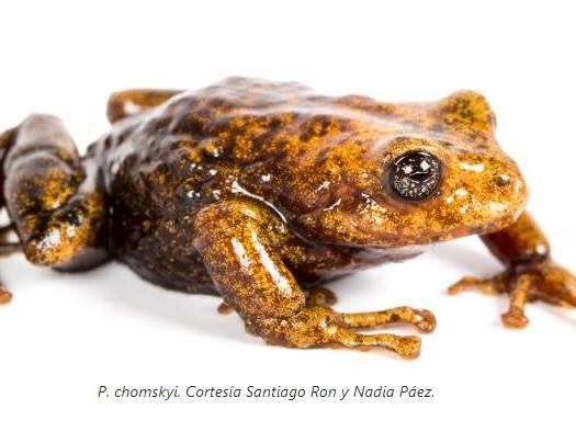 In Ecuador piovono rane: 11 nuove specie e un nuovo sub-genere (FOTOGALLERY)