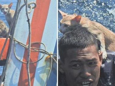 Gatti abbandonati su una nave che affonda, militare della Marina li porta in salvo a nuoto
