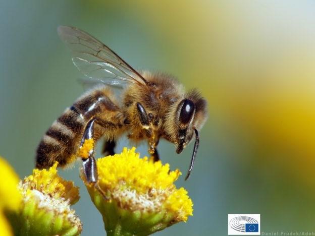 Biodiversità, parlamento europeo: il 30% delle aree terrestri e marittime dell'Ue deve essere protetto