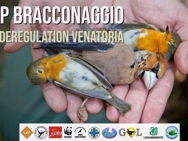 Caccia, la Lombardia approva la deregulation venatoria. Le associazioni: un martedì nero per la fauna selvatica