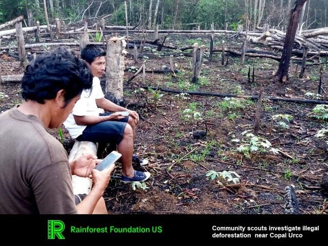 Deforestazione in Amazzonia: fornire tecnologia ai popoli indigeni frena la perdita di alberi