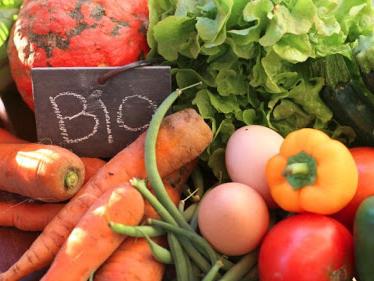 In Toscana bandi da 20 milioni di euro per un'agricoltura più sostenibile e resiliente