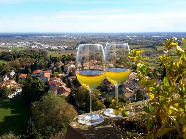 """In alto i calici, i vini di Bertinoro fanno incetta di riconoscimenti: """"Uno stimolo per valorizzare il nostro territorio"""""""