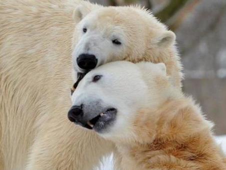San Valentino, storie di amori impossibili tra animali. Il Wwf: colpa del cambiamento climatico