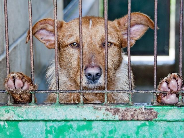Vittoria animalista: in Corea del Sud chiudono i mercati di carne di cane