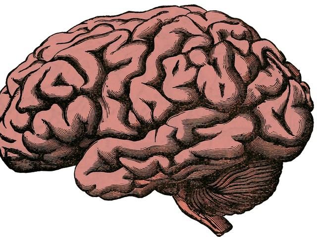 La scienza ci svela i segreti dei piccoli (grandi) cervelli