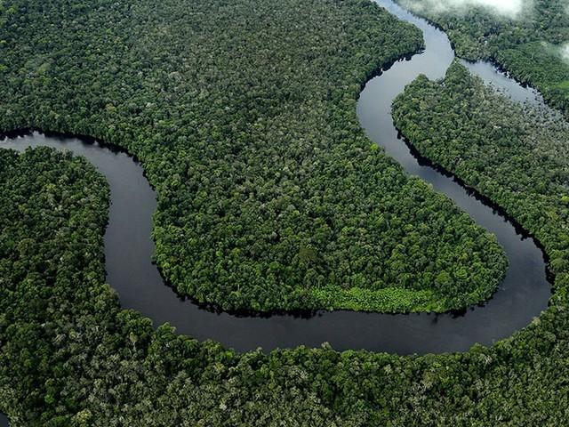 Amazon Day, Wwf: gli incendi colpiscono 265 specie già a rischio