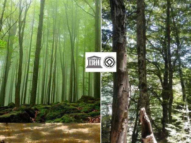 Le faggete vetuste dei Parchi del Pollino e dell'Aspromonte nel patrimonio mondiale Unesco