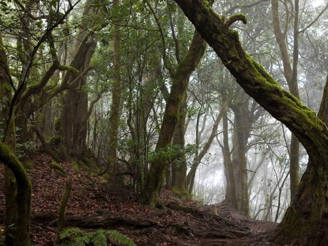 Forest bathing, immergiamoci nei boschi più antichi del mondo
