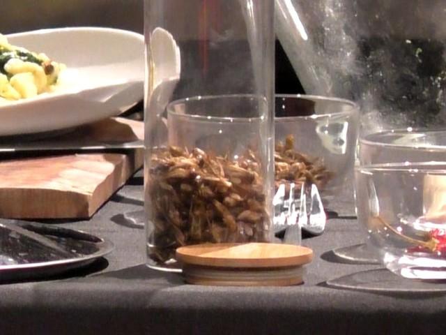 VIDEO   La tradizione barese incontra l'entomogastronomia: al Tedx le orecchiette con cime di rapa e...grilli