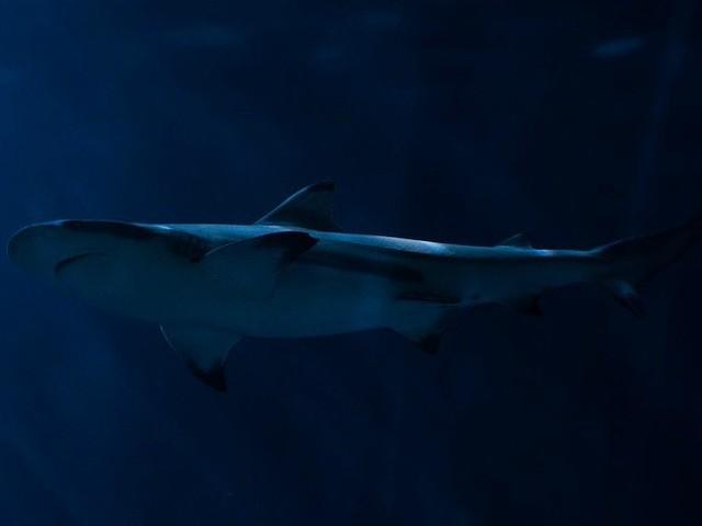 Donna cade nella vasca degli squali in attesa del cibo/ Video, terrore all'acquario nel centro commerciale