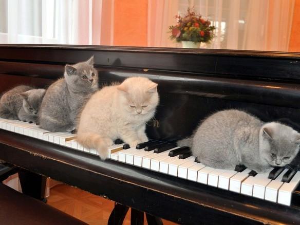 Ecco la musica per gatti: fra le note miagolii, fusa, graffi e leccate