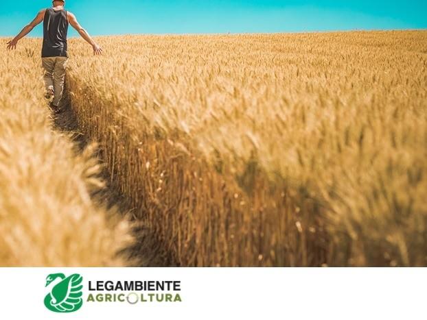 PAC, Legambiente: Ue e Italia blocchino i sussidi a poggia. Agricoltura sostenibile in linea con il Green Deal