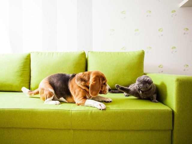 Condominio: quanti animali domestici è possibile tenere in appartamento?