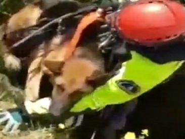 Palermo, cani precipitano in una cava: la complicata manovra dei Vigili del fuoco per salvarli