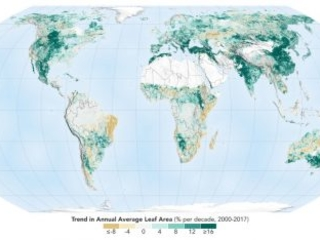 Il mondo è diventato più verde, grazie a Cina e India