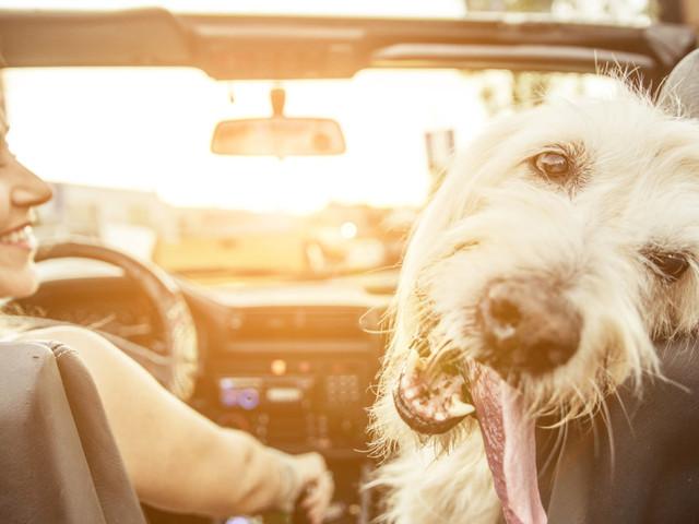 """L'italiano TripForDog è il primo portale in Europa per organizzare le vacanze """"dog friendly"""""""