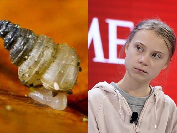 Nuova specie di chiocciola dedicata a Greta Thunberg: minacciata da siccità e deforestazione