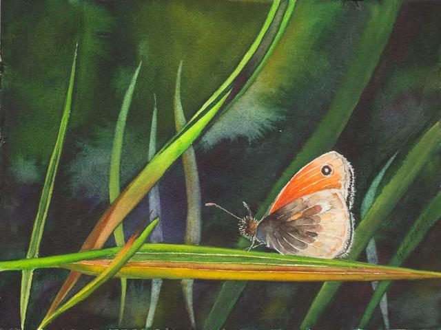 Farbtupfer in der Wiese – mit einem Kleinen Wiesenvögelchen