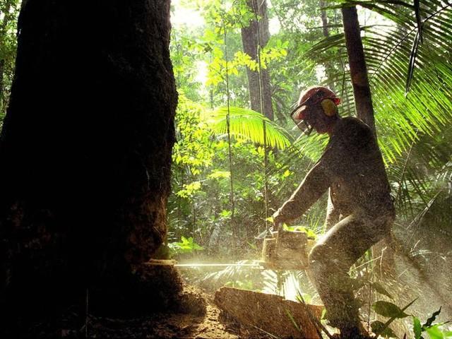 De Brazilianen beginnen te voelen dat hun land hard op weg is milieuparia te worden