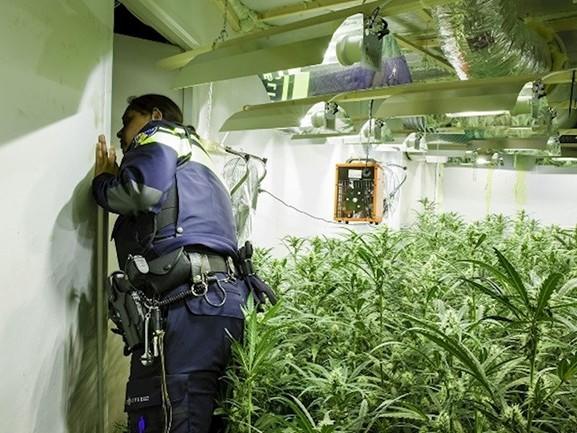 Politie rolt hennepkwekerij op in Deventer