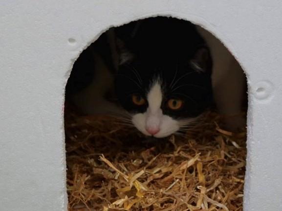 Ook zwerfkatten hebben warm nest nodig: dierenambulance naarstig op zoek naar isoboxen