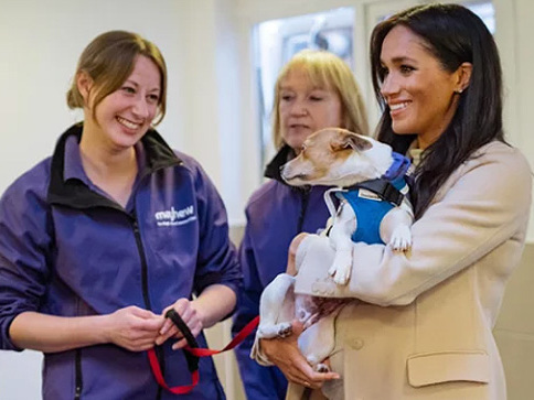 """Pregnant Duchess Meghan Markle Was Called """"Fat"""" By Fellow Volunteer At An Animal Charity"""