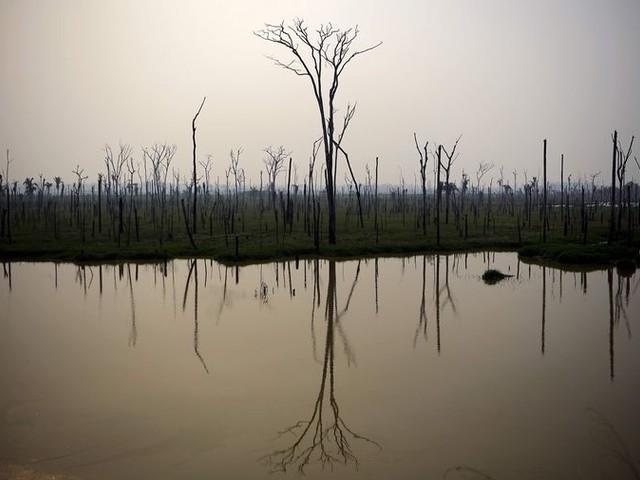 Bolsonaro wijzigt toon na verontwaardiging bosbranden