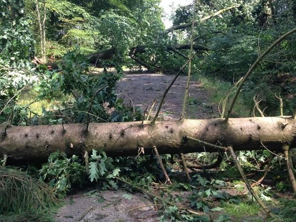 Terreinen Landschap Overijssel rondom Enschede nog dagen dicht na storm